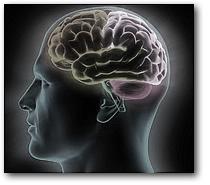 Рост мозга человека ограничен энергетикой его тела