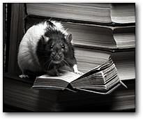 """В случае если крысы """"сидели"""" на малой дозе наркотиков или получали среднюю дозу в течении короткого периода времени — они чаще всего предпочитали изучить новый предмет, чем получить очередную дозу."""